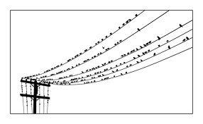 birdsonawire